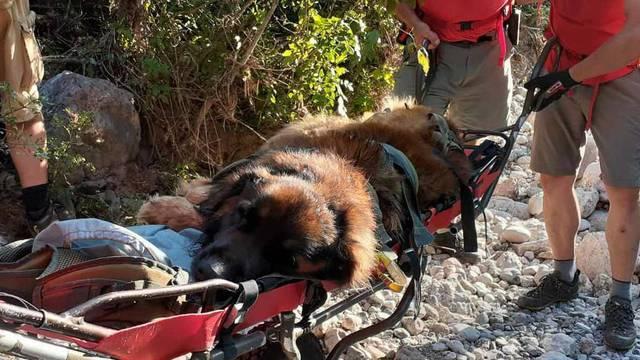 HGSS spasio dehidriranog psa: Vlasnik je ignorirao upozorenja