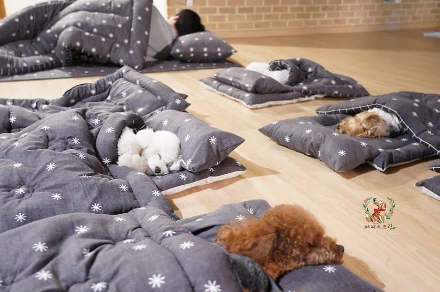 Razgalili internet: U psećem vrtiću štenci spavaju kao bebe