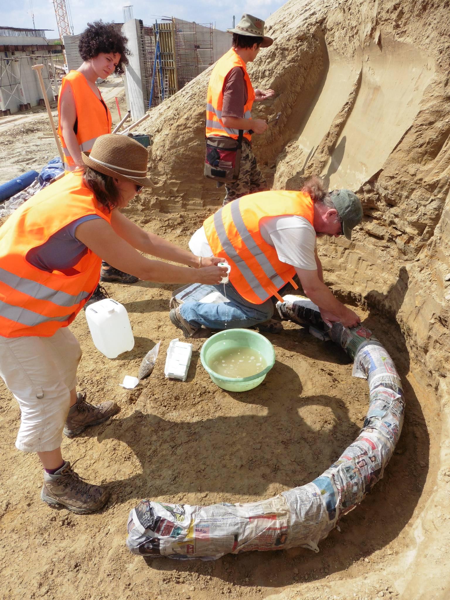 Hrvat u Beču: Iskopao sam kljove mamuta, vrlo su rijetke