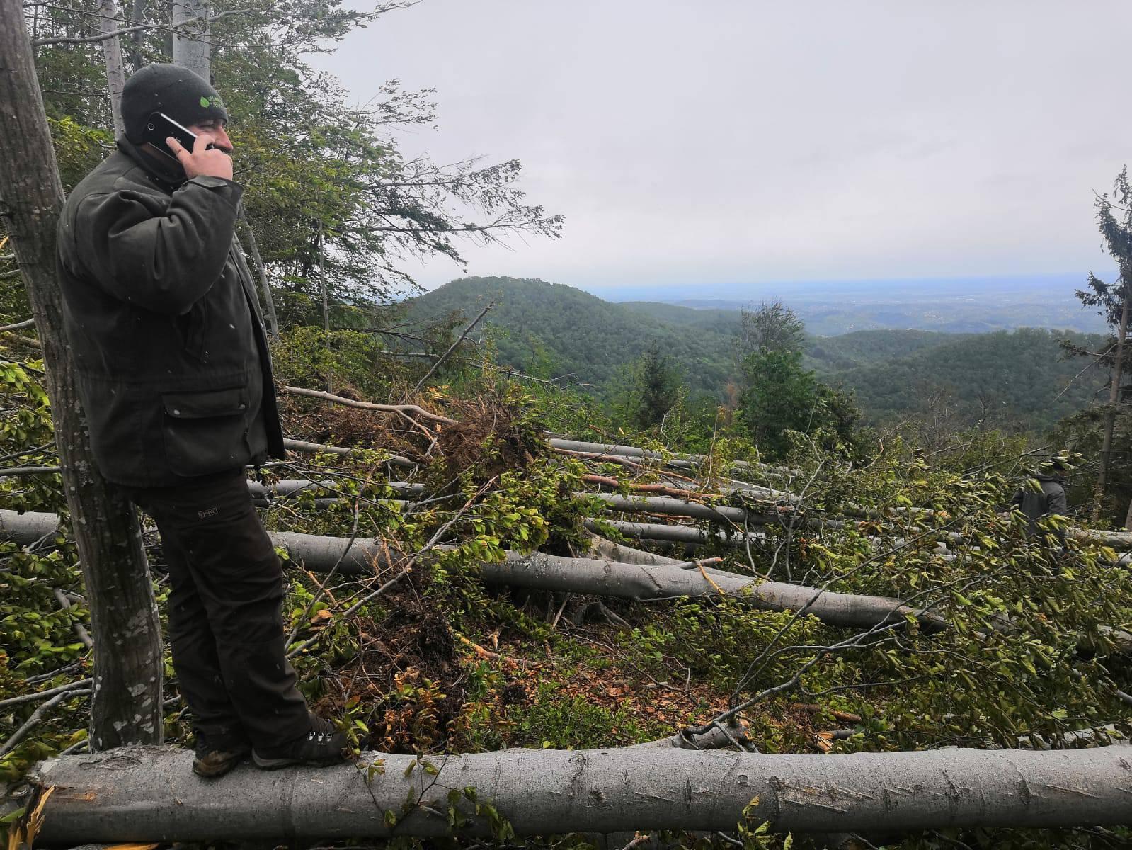 Prizor katastrofe: Oluja srušila stotine stabala na Medvednici