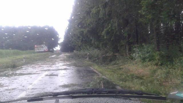 Kataklizma u Požegi: Vjetar je čupao stabla, kiša sve poplavila