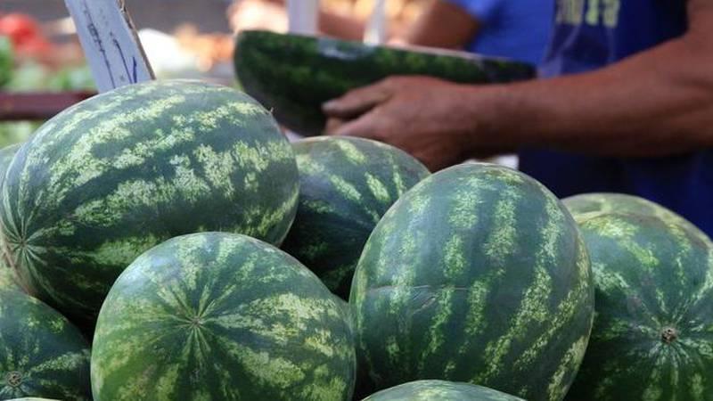 Neretvanske lubenice se zelene na poljima, provjerite odakle su ove koje trenutno kupujemo