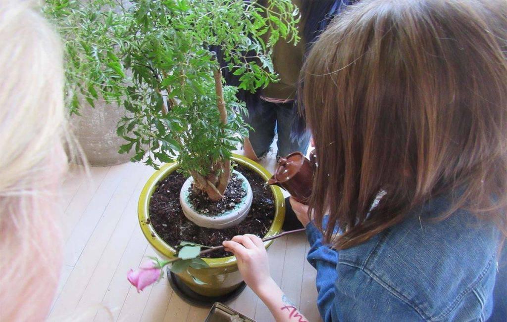 Originalni pokop: Pepeo umrlog hrani drvo i pomaže mu narasti