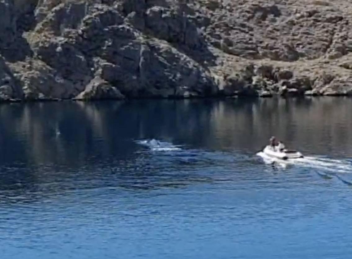 Panika zbog biologa: Mislili su da pucaju u kita i zvali policiju