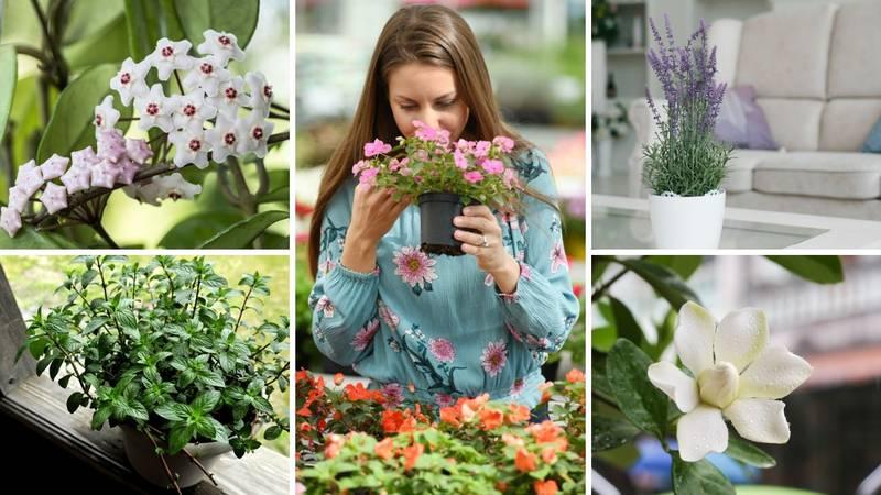 Stvorite mirisnu oazu: Biljke od kojih dom miriše božanstveno