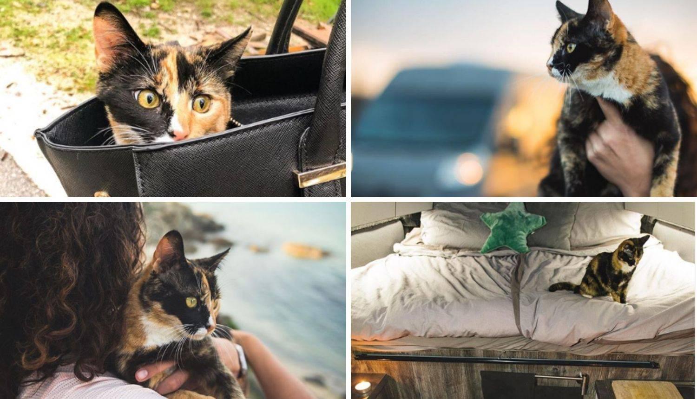 Kako je maca iz Splita krenula na put po svijetu u kamperu