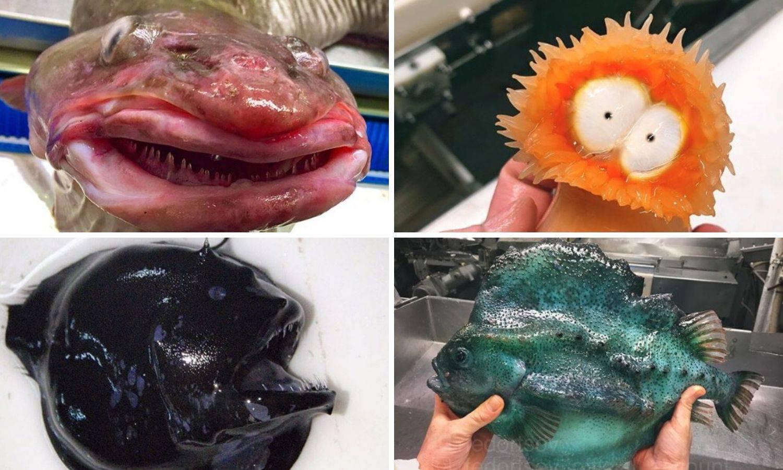 Morske nemani kojima ni ribari ne znaju imena kad ih izvuku