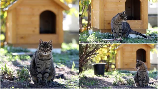 Mačka Mali Joka svoj dom je pronašla na gradskom groblju Kvanj, a za zimu ima i kućicu