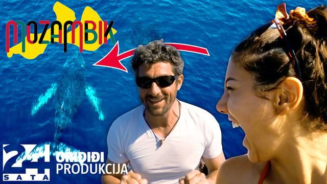 Bućan i Sara plivali u oceanu  s kitopsinama: 'Ne želimo otići iz ove zemlje, veličanstveno je!'