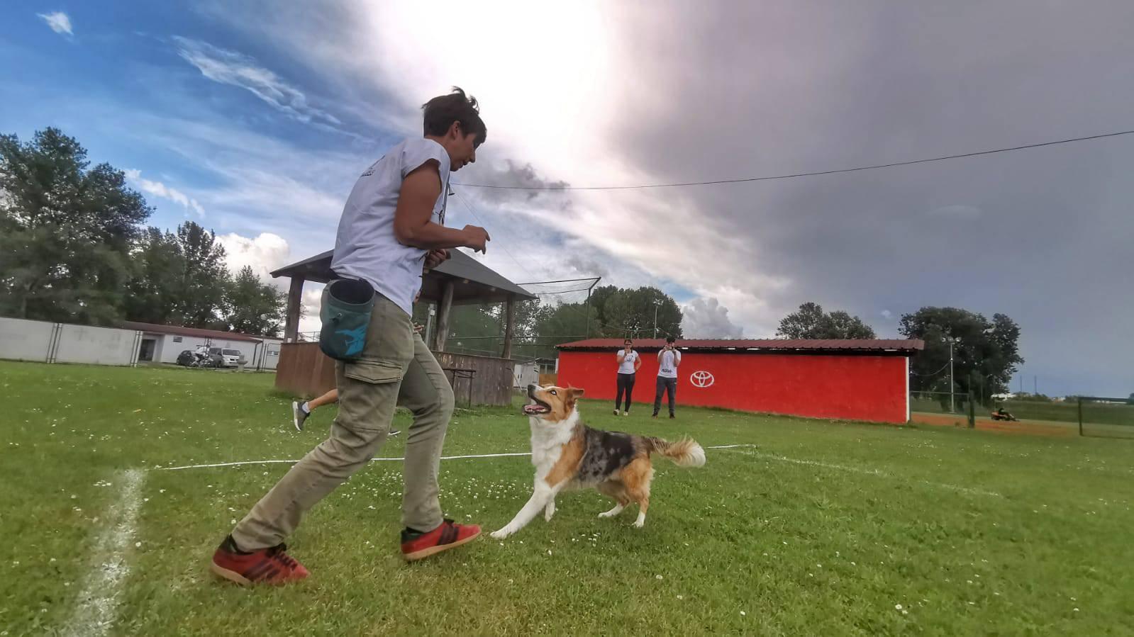 Kujica Kota nova je rekorderka - hoda unatraške na pet metara