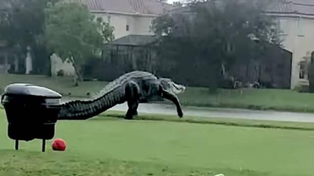 VIDEO Što je ovo? Krokosaur?!