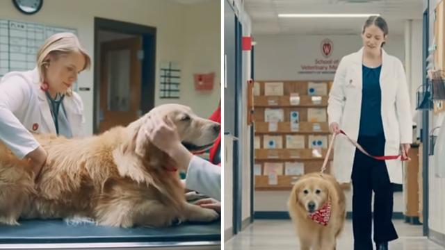 Milijunašu spasili psa pa im je platio reklamu od 6 mil. dolara