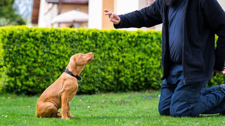 Psi su bez greške nanjušili miris tri faze epileptičkih napadaja
