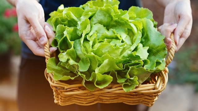 Savjeti kako da svježi peršin i salata prežive dulje u frižideru