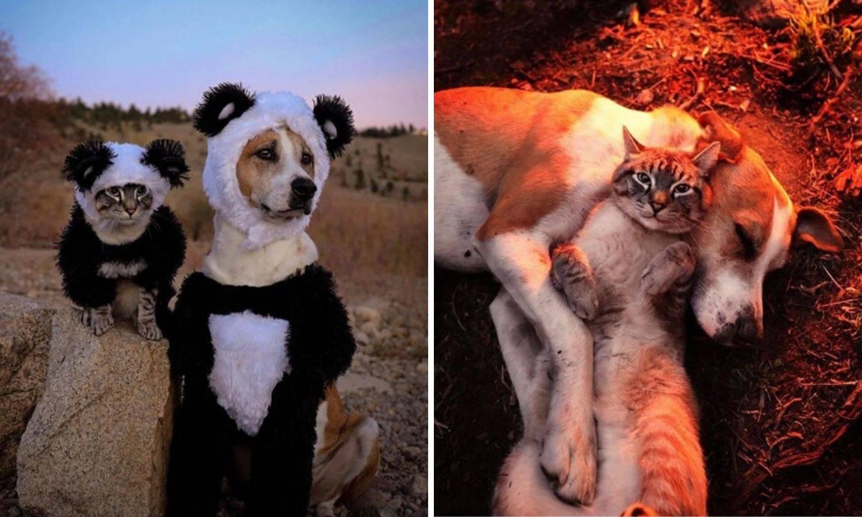 Preslatko: Henry i Baloo, pas i maca zajedno u avanturi života