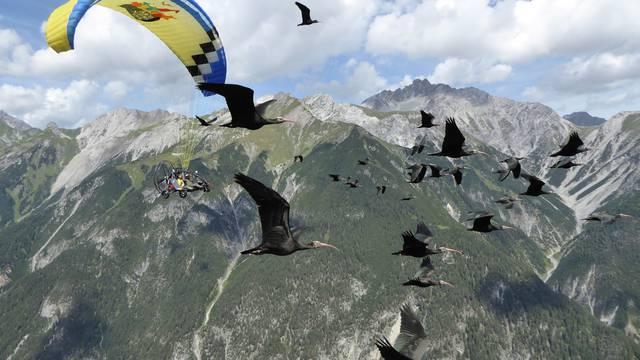 Stravične brojke: U krivolovu strada i do pola milijuna ptica