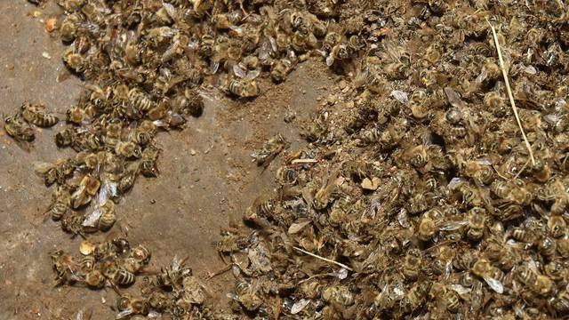 Pomor pčela u Međimurju, stradalo pedesetak milijuna pčela