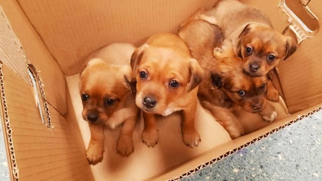 U Dumovcu svaki dan sve veća gužva: Mnogi napuštaju pse...