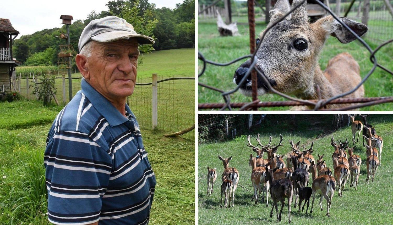 Lovac ima krdo jelena lopatara: 'Unuke ih vole, stalno dolaze!'