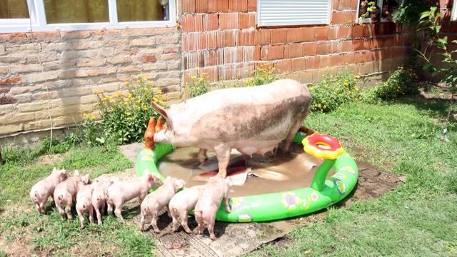 Mama Luca obožava kupanje, pa je dobila svoj bazenčić...