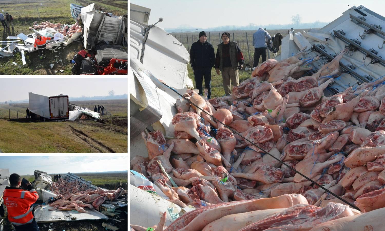U kamionu punom svinjskih polovica izletio je s autoceste