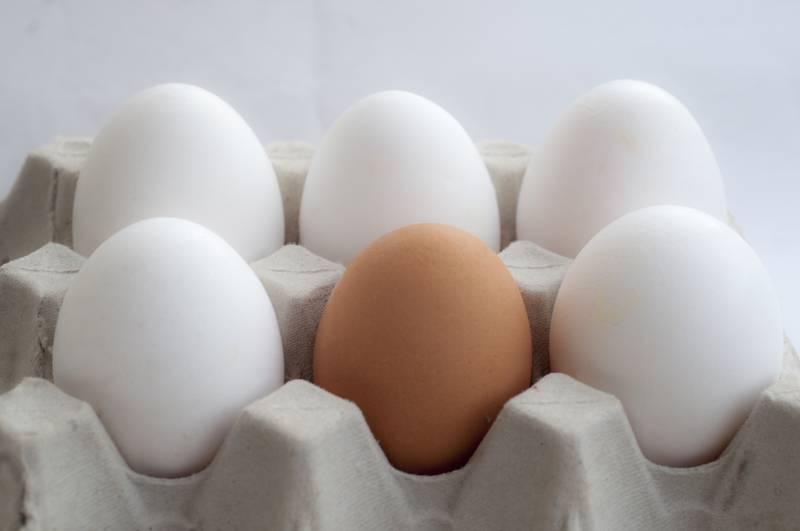 Koja je razlika između jajeta sa smeđom i s bijelom ljuskom?