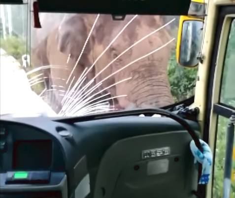 Tko je jači? Divlji slon se malo 'igrao' s busom i kamionetom...