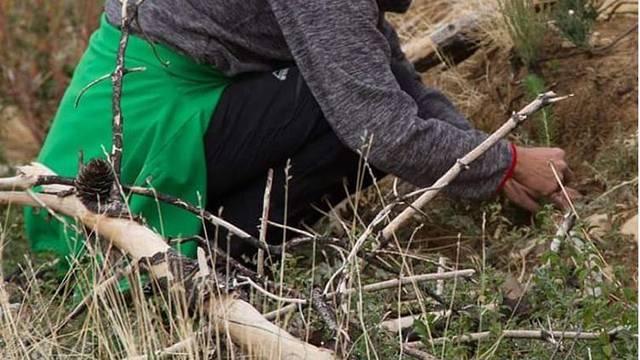 Posadi drvo i pomozi obnoviti opožarena područja Dalmacije