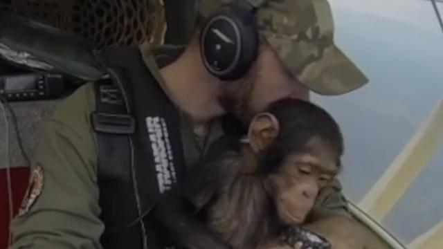 Pilot spasio malu čimpanzu od krivolovaca: 'Treba zagrljaje'