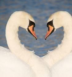 11 životinja koje cijeli život ostaju vjerne jednom partneru