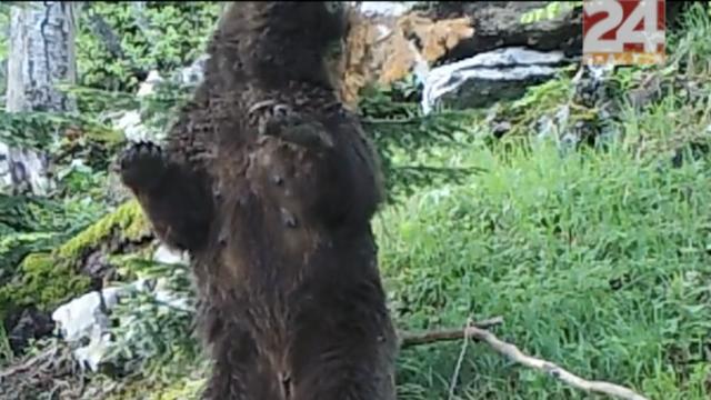 Češkaj me, češkaj: Medvjedica se masirala o drvo na Velebitu