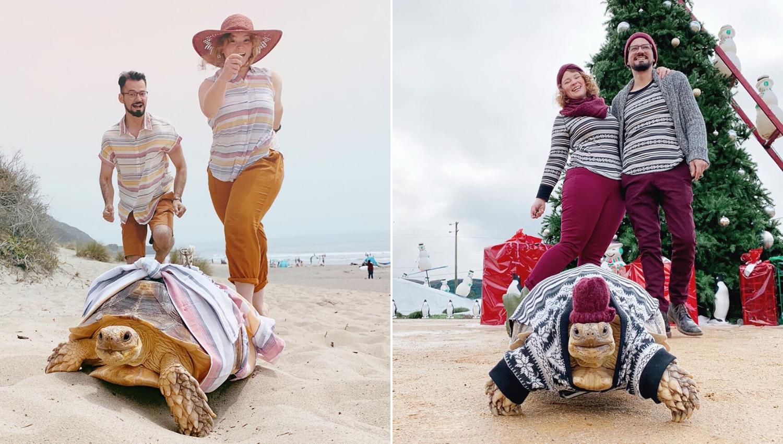 Vlasnici kornjaču Ethel oblače isto kao i sebe: 'Preslatka je'