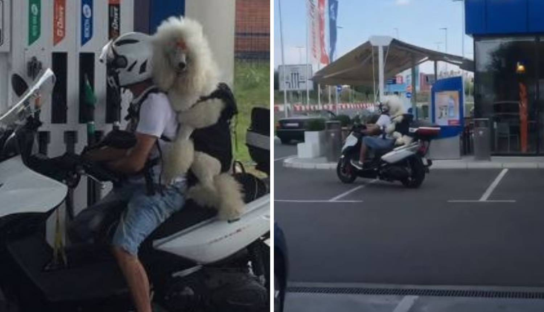 'Nisam mogla vjerovati': Pudla se vozila na motoru iza gazde