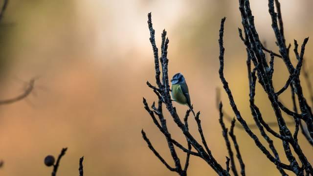 NP Krka ima dokumentarni film o 229 ptičjih vrsta 'Divlji svijet'
