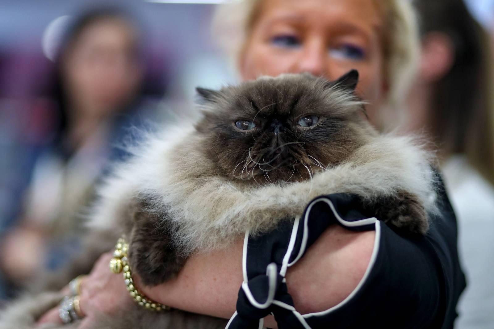 Zaprešić: Međunarodna izložba mačaka u trgovačkom centru Westgate