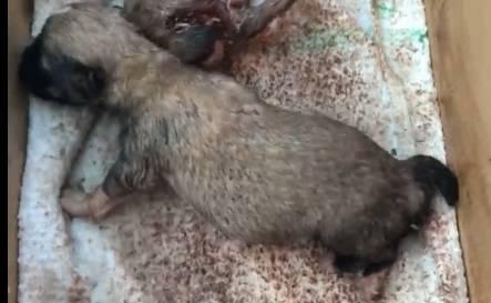 Umirali su u mukama: Kujicu i mladunce 'crvi su žive pojeli...'
