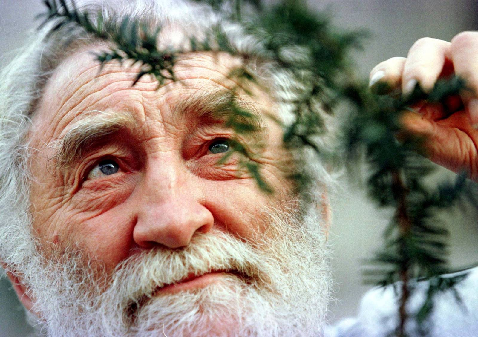 FILE PHOTO: Professor David Bellamy views a clipping from a 1,000 year-old Yew tree as he launched the Yew tree ..