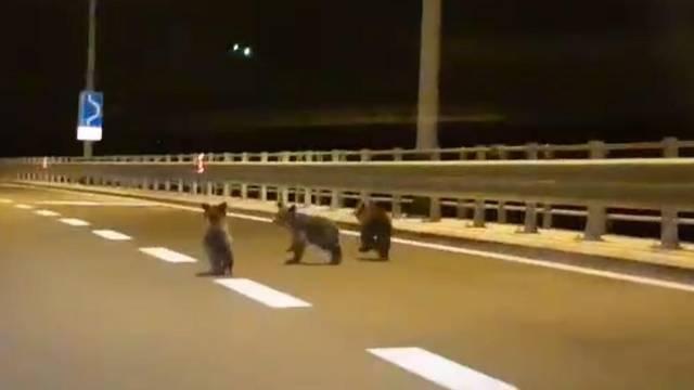 Trči, braco, trči: Tri medvjedića bježala su ispred automobila