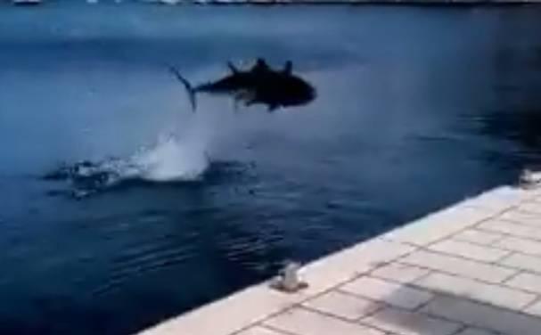 Otišli brodovi, a došla je ona: Tuna 'prošetala' viškom rivom