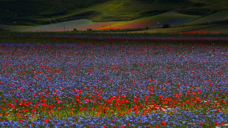 Tko ovdje ne bi želio provesti dan? Talijanska polja cvijeća kao stvorena su za uživanje