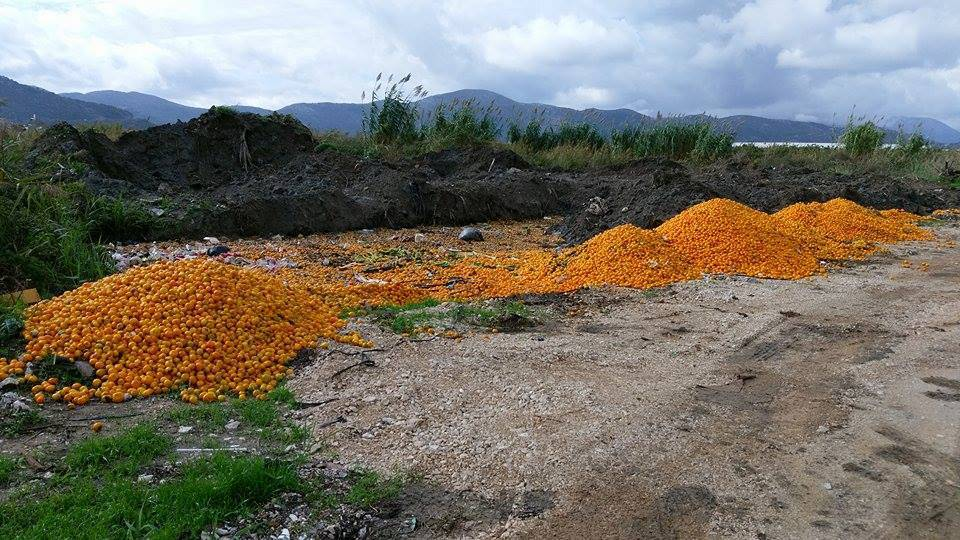 'Za odbačeno brdo mandarina odgovoran je dio otkupljivača'