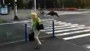 Vrane napadaju: Obrušile su se na muškarca i ženu u Zagrebu