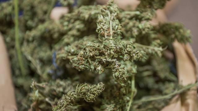 Osijek: Izvanredna konferencija policije povodom velike zapljene marihuane