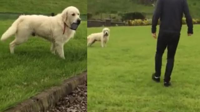 I njemu je dosta 'Fejsa': Pas je ukrao mobitel i neće ga vratiti
