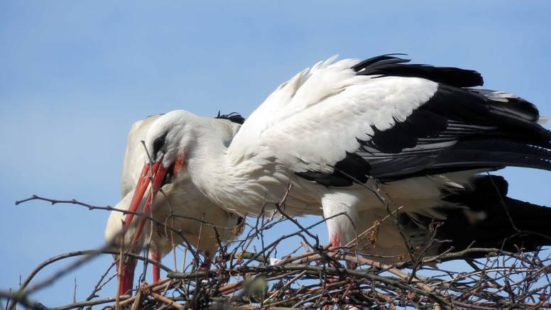 Najpoznatiji ptičji par očekuje prinovu: Grade si i vikendicu