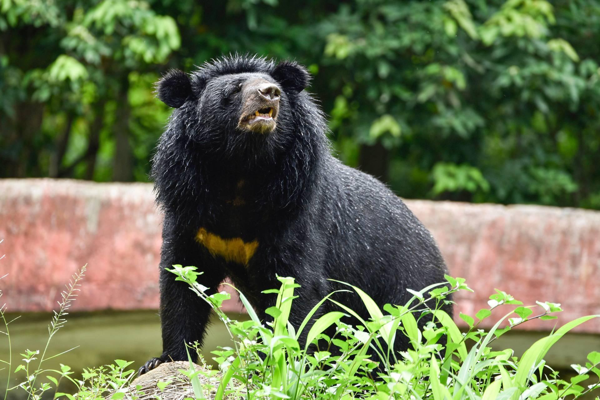 Summer at Assam State Zoo, Guwahati, India - 10 Jun 2019