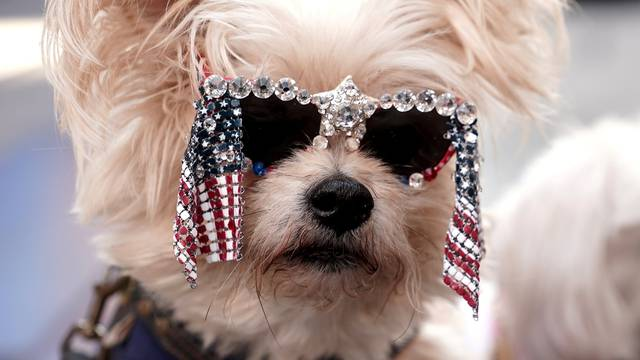 People pose their dog for pictures as they await the decision in the U.S. election in Times Square