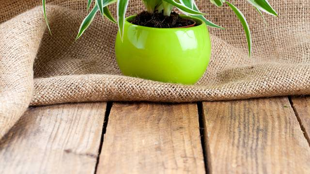 Četiri razloga zbog kojih se lišće na vašim sobnim biljkama suši
