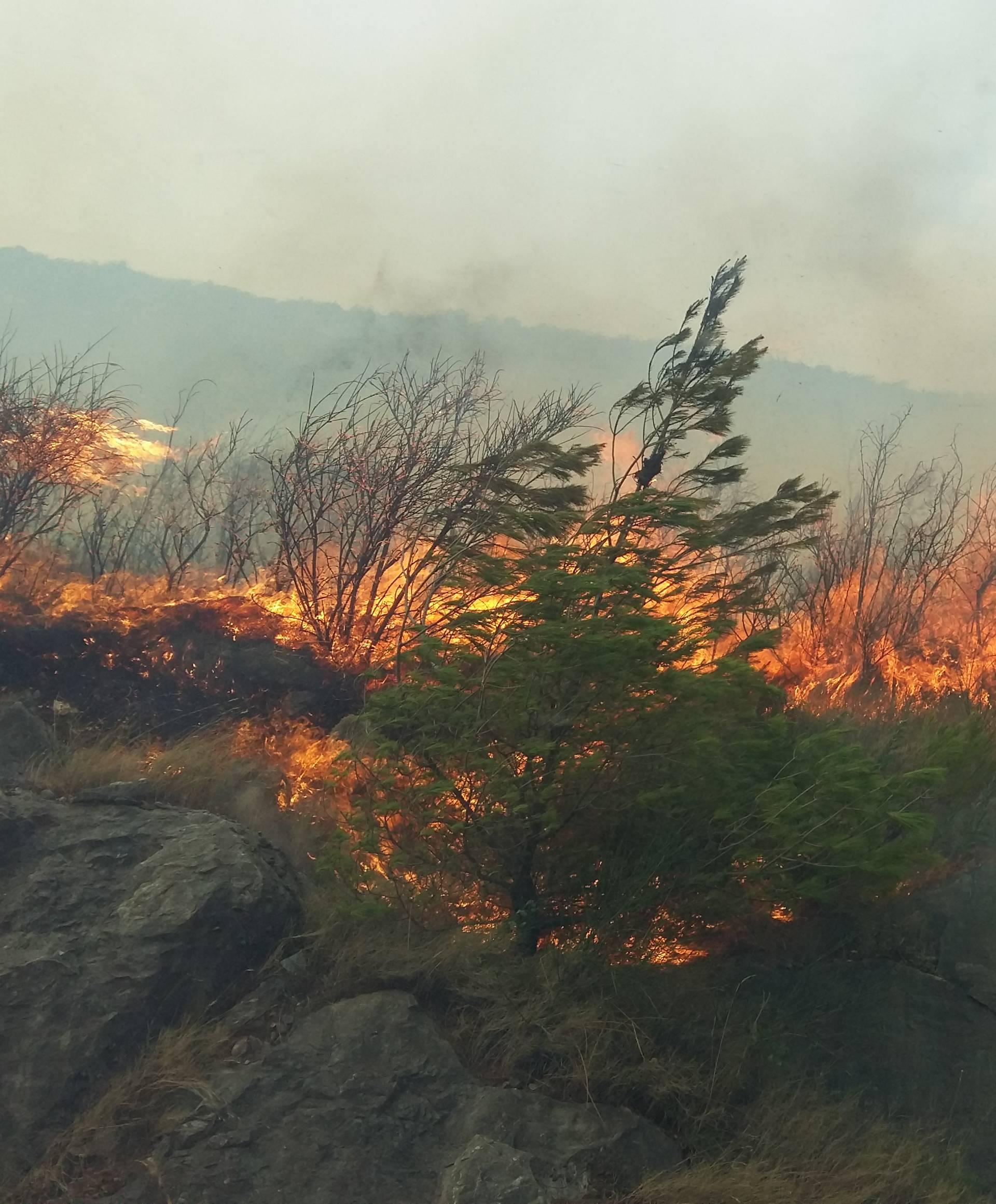 U Žrnovnici gori od jutros, svi koji mogu pomažu gasiti požar