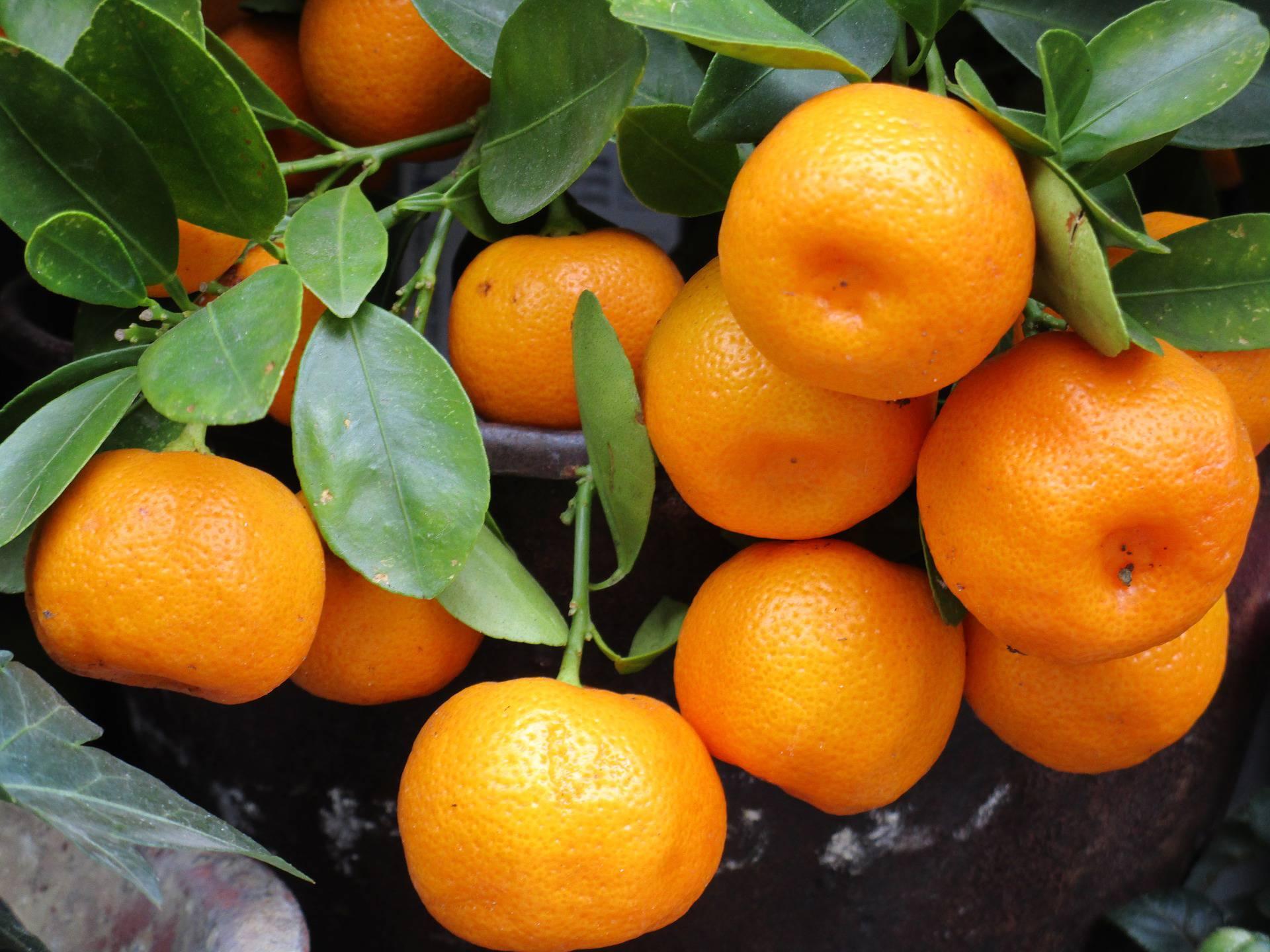 Sedam mandarina dnevno radi čuda: Dokazano čine ljepšima